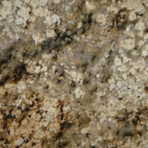 Siena Cream New Granite